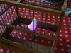 Eames Bird, éclairé dans sa cage 2