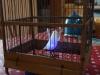 Eames Bird, éclairé dans sa cage 4